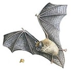 Pest Control Offering Bat Removal